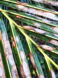 Palmenmuster Stockfotografie