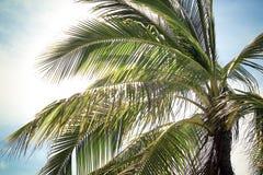 Palmennahaufnahme stockfoto