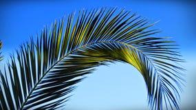 Palmenniederlassung stockbilder