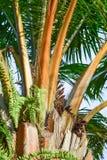 Palmenniederlassung Lizenzfreies Stockfoto