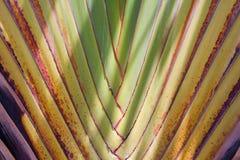 Palmenniederlassung Lizenzfreie Stockfotos