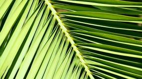 Palmenniederlassung für Kapitalien lizenzfreie stockfotos