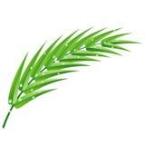 Palmenniederlassung mit Wassertropfen Stockbild