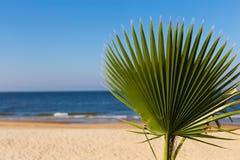 Palmenniederlassung vor dem hintergrund des Meeres und des Himmels Kopieren Sie Platz Stockfoto