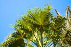 Palmenniederlassungen gegen blauen Himmel Stockfotos