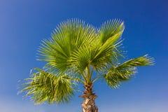 Palmenniederlassungen gegen vollen Tag des blauen Himmels Lizenzfreies Stockfoto