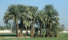 Palmenoase Afrikas Luxor Stockfoto