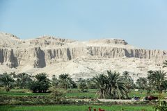 Palmenoase Afrikas Luxor Stockfotografie