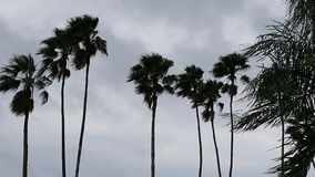 Palmenonweer Stock Fotografie