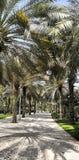 Palmenpark in Dubai stockfotografie