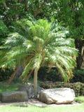 Palmenporträt Lizenzfreies Stockbild