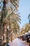 Palmenpromenade in Alicante mit Souvenirladen lizenzfreie stockfotos