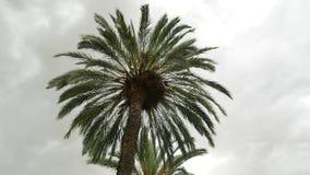 Palmenregenwolke timelapse stock video footage
