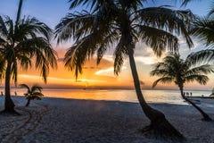 Palmenschattenbild bei Sonnenuntergang Lizenzfreie Stockbilder