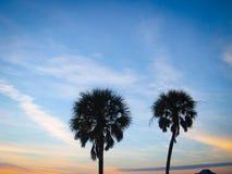 Palmensilhouet Stock Afbeelding