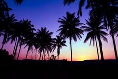 Palmensilhouet royalty-vrije stock fotografie