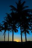 Palmensilhouet stock fotografie