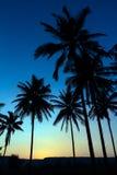 Palmensilhouet met zonsondergang stock afbeeldingen