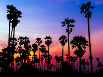 Palmensilhouet op mooie zonsondergang stock afbeelding