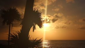 Palmensilhouet ` s vroeg in de Ochtend stock video