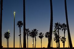 Palmensilhouetten tijdens zonsondergang Stock Afbeelding