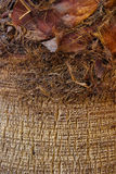 Palmenstammabschluß oben lizenzfreie stockfotos