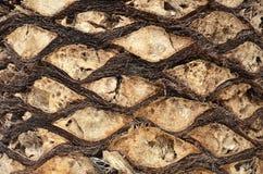 Palmenstammhintergrund Stockbilder