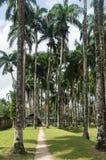 Palmentuin Fotografering för Bildbyråer