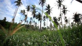 Palmentuin tegen blauwe hemelachtergrond  stock video