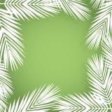 Palmenurlaubgrenze Flache Art Grün und Weiß Stockfoto