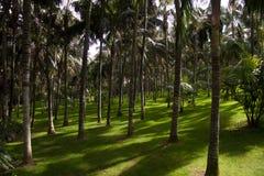 Palmenwald Stockbild