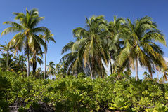 Palmenwald Stockfotografie
