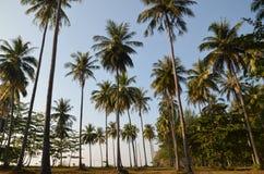 Palmenwaldung Lizenzfreies Stockfoto