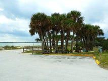 Palmenwaldung auf dem Ufer Stockfotos