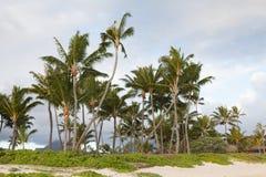 Palmenwaldung auf einem Strand an einem idealen tropischen Standort Stockbilder