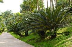 Palmenzeigen in königlicher Flora 2011 am chiangmai. Stockfoto