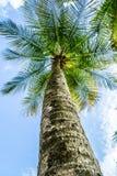 Palmeperspektive von unterhalb stockbild