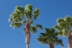 palmer αέρας στοκ φωτογραφίες με δικαίωμα ελεύθερης χρήσης