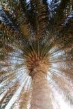 Palmera Imagen de archivo libre de regalías