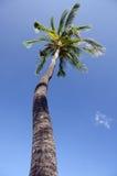 Palmera alta de la reina en anticipado, cerca de la bahía de Anaeho'omalu Foto de archivo
