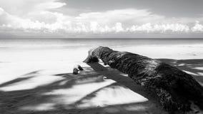 Palmera caida en blanco y negro Imagenes de archivo