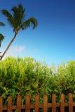 Palmera, cerca y cielo azul Imagen de archivo libre de regalías