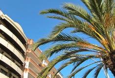 Palmera, cielo azul, construyendo Imagen de archivo libre de regalías