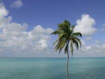 Palmera, cielo, océano Imágenes de archivo libres de regalías