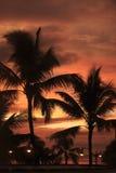Palmera con puesta del sol fotos de archivo