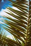 Palmera con tono del cielo azul, retro y del vintage Fotos de archivo