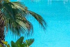 Palmera contra el agua azul tropical imagen de archivo