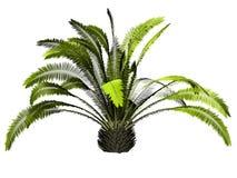 palmera 3d Imagen de archivo libre de regalías