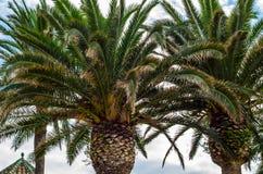 Palmera de extensión hermosa en la playa, símbolo exótico de las plantas Fotos de archivo libres de regalías