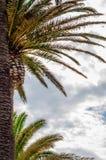 Palmera de extensión hermosa en la playa, símbolo exótico de las plantas Fotografía de archivo libre de regalías